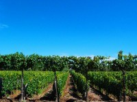 Most productive wine regions in Argentina