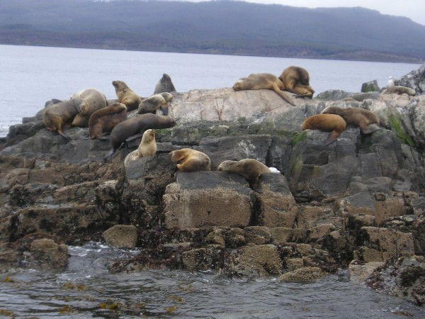 Sea lions near the Beagle Channel Heretiq/ookaboo