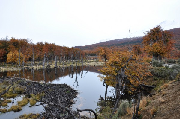 The Tierra del Fuego National Park Jorge Lascar/Flickr