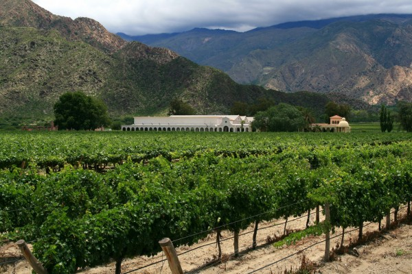 Cafayate vineyards Tanenhaus/Flickr